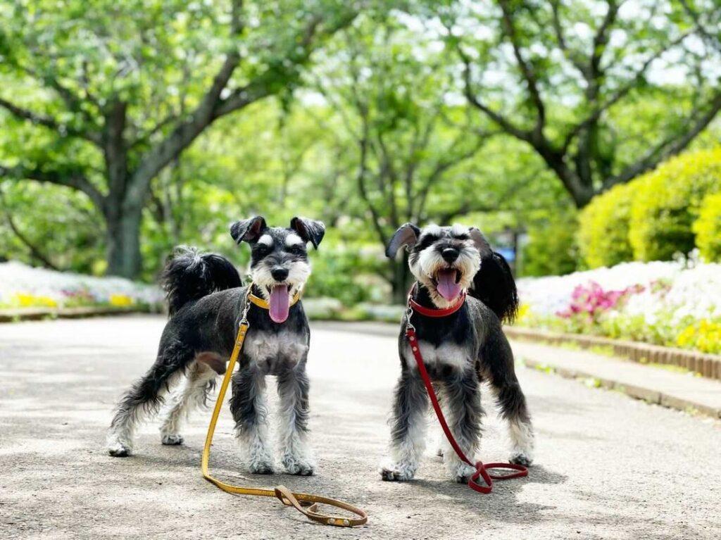 犬と一緒に成田ゆめ牧場