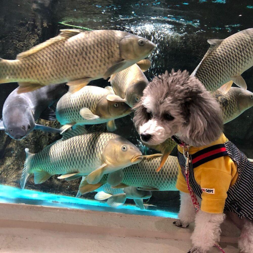 犬と一緒にかすみがうら市水族館