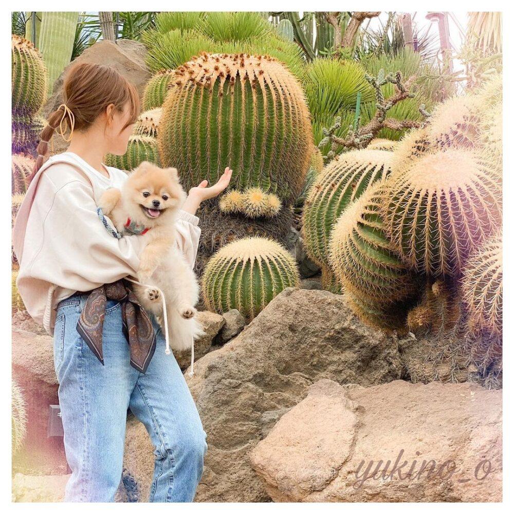 犬と一緒にシャボテン公園
